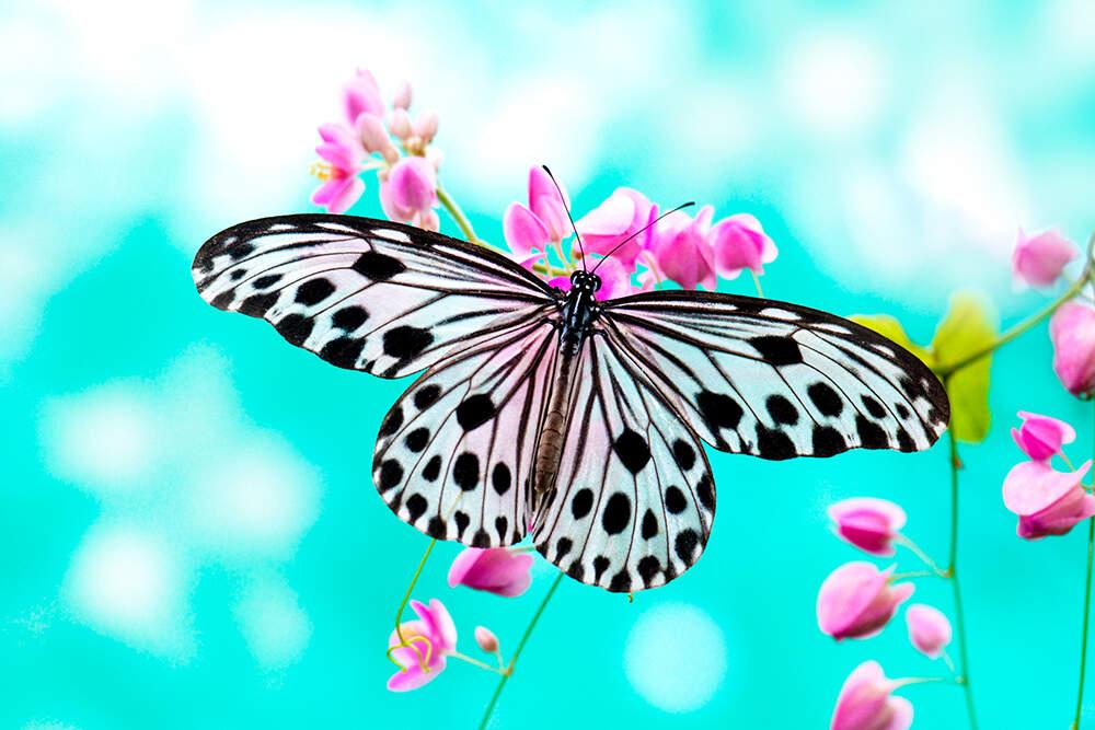 Butterfly Garden - Design Inspiration - 3