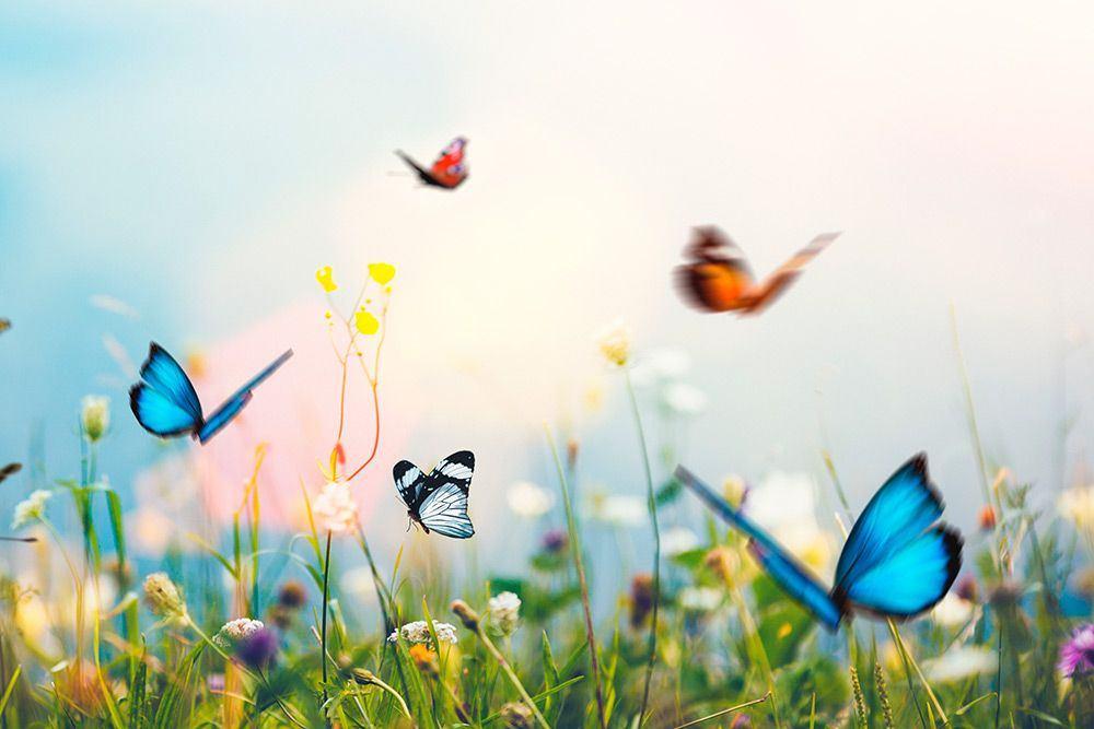 Flutterbyes - Design Inspiration - 1