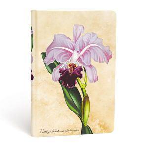 Brasilianische Orchidee - Angle