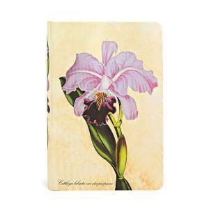 Orchidée Brésilienne - Front